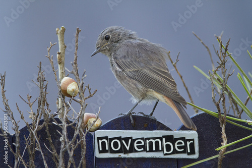 Bird perched on a October decorated fence,landscape orientation