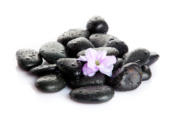 Spa stones with drops and  flowers isolated on white