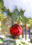 Christmas red ball on fir-tree branch