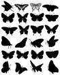 Silhouettes of butterflies-vector