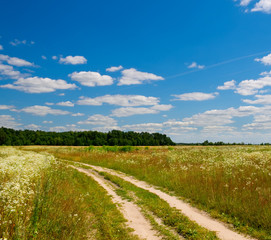 Road in the summer field