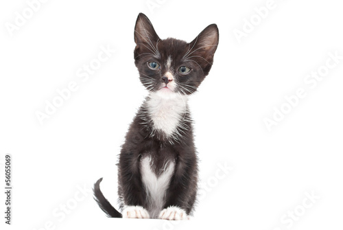 Cute eight week old Tuxedo Kitten on a white background.