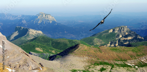 Staande foto Eagle eagle flying in the Pyrenees