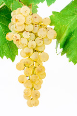 white grape with leaves