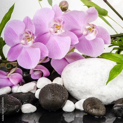 fototapete wellness sch nheit orchideen mit wei en und. Black Bedroom Furniture Sets. Home Design Ideas