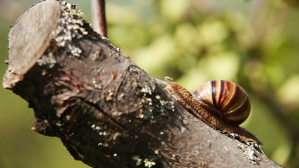 Snail climbs to the top of the branches