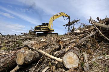 Log loader carrying logs