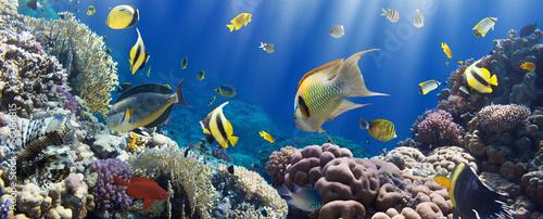 koral-i-ryba