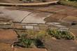agriculture malgache