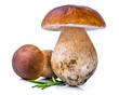 Porcini Mushroom with Rosemary