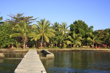 ponton et palmiers