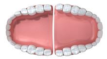 Ouvrir dents humaines Faux Extrême gros plan