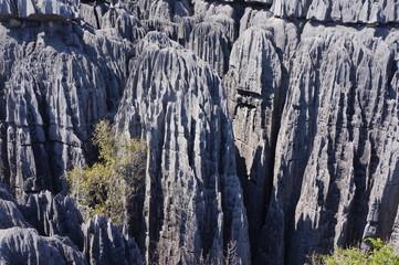 des Tsingys du Bemaraha