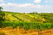 Viennese wine yard Austria