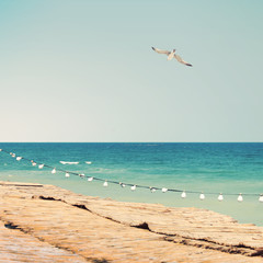 Summer sea sight with seagull