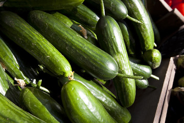 Close up of cucumber