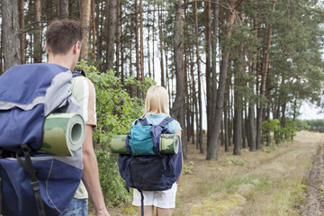 Rear view of young backpackers walking in forest trail