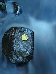 Aspen leaf on basalt boulder in blurred mountain stream.