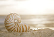 nautilus shell on beach, sunrise and  tropical sea