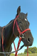 Horse head over blue sky