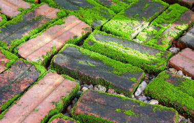 mossy on damp brick in the morning light