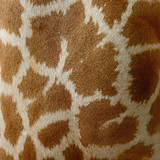 Giraffe skin - Fine Art prints