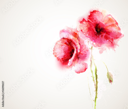 Tuinposter Abstract bloemen The two flowering red poppies. Greeting-card.