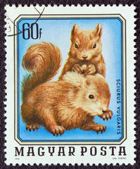 Two young squirrels (Hungary 1976)