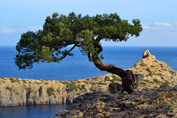 Marine landscape with a tree on a rock
