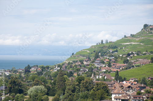 Houses amidst vineyards by Lake Geneva in Vevey, Switzerland