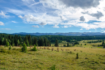 Jahorina mountain