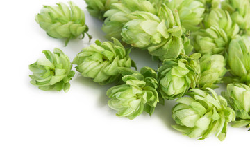 hop plant over white background