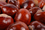 Whole fresh chestnuts