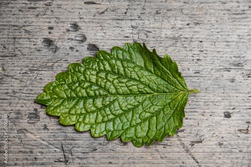 one leaf of balm