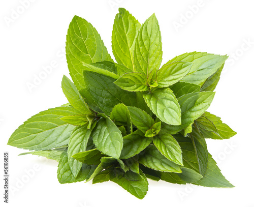a bunch of mint on white background