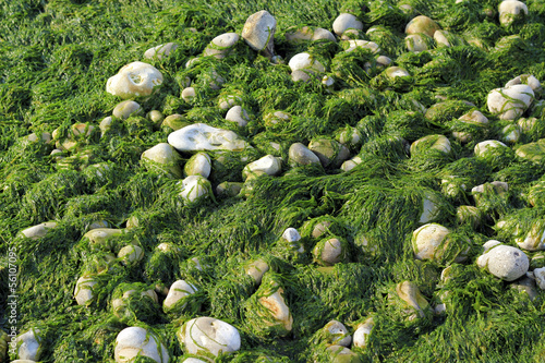 Seaweed and pebbles background