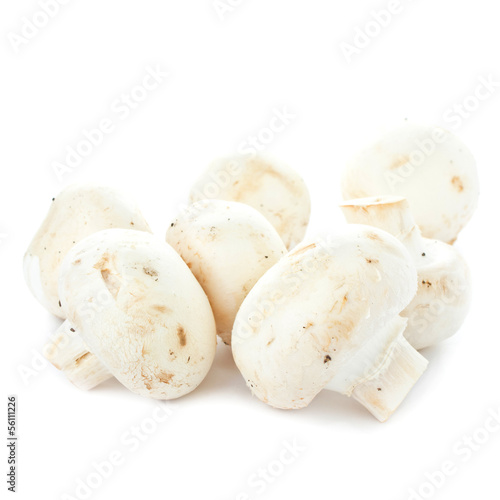 White fresh raw champignon mushroom  on white background