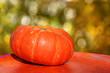 pumpkin herbstdeko im garten