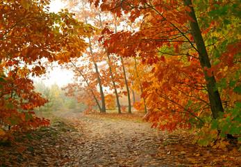 Autumn park © silver-john