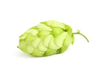 Fresh green hop.