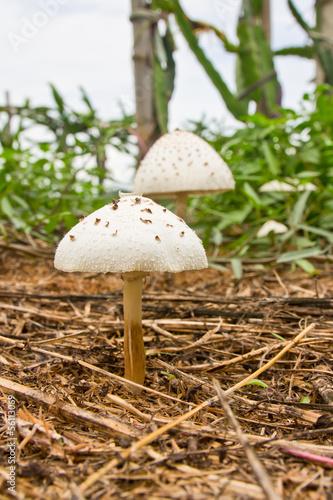 wild mushrooms on the ground