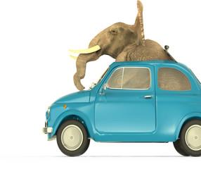 Elefante dentro coche Pequeño Italiano