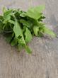 tied bunch of fresh arugula