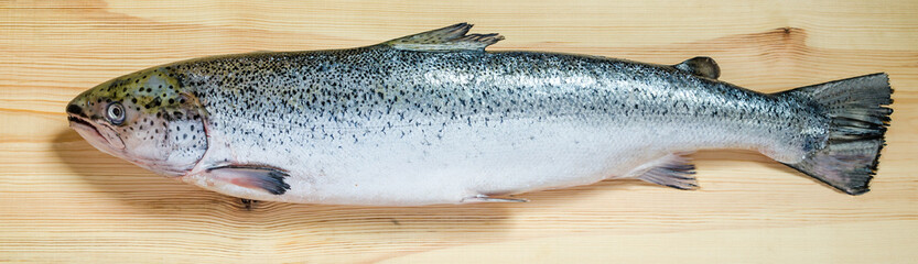 Atlantic Salmon whole fish
