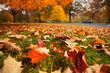 Autumn park leaves