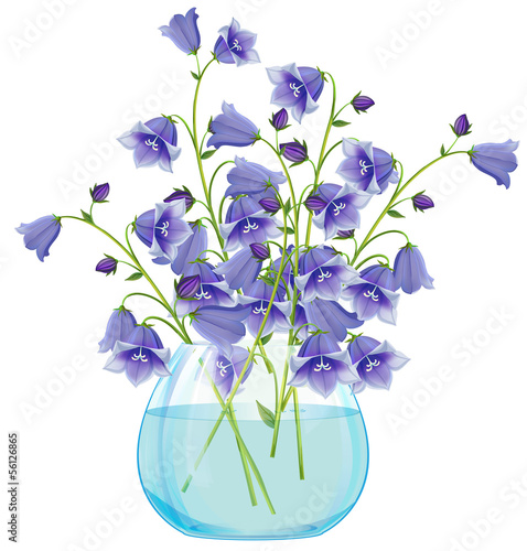 Campanula bell flowers in glass vase