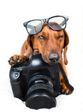 Fototapety Dog with camera