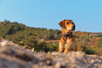 Street dog on the beach of Corfu in summer. Ionian island. Greec