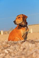 Street dog on the beach of Corfu in summer. Ionian island. Greec