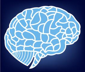 vector brain model